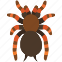 arachnid, creepy, hairy, halloween, scary, spider, tarantula icon