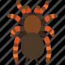 arachnid, creepy, hairy, halloween, scary, spider, tarantula