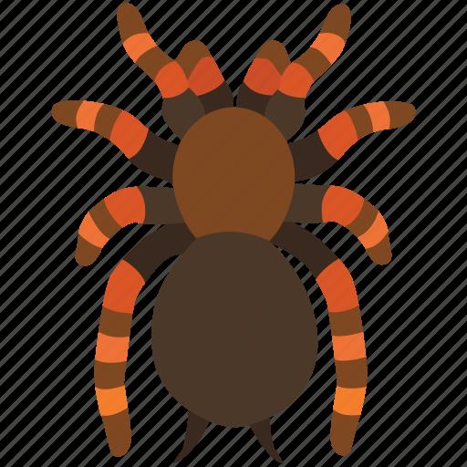 arachnid, creepy, hairy, halloween, scary, spider, tarantula icon