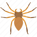 giant crab, halloween, huntsman, rain, scary, spider, wood icon