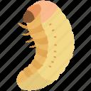 grub, larva, larvae, larval, maggot, pupa, silkworm icon