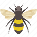 bee, bumble, bumblebee, buzz, hive, honey, pollen icon
