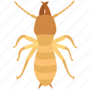 colony, exterminator, infestation, pest, termite, white ant, woodworm icon