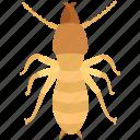 colony, exterminator, infestation, pest, termite, white ant, woodworm
