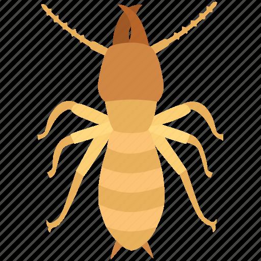 colony, exterminator, infestation, pest, termite, white ant, woodworm icon