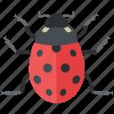 beetle, bug, cute, lady, ladybeetle, ladybird, ladybug icon