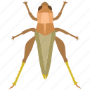 bug, chapuline, cricket, grasshopper, insect, katvdid, locust icon
