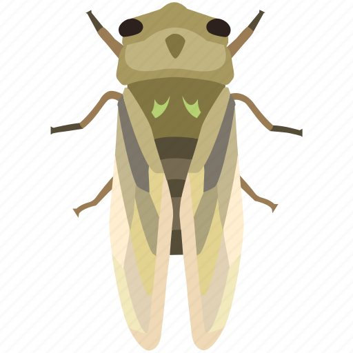 bug, chinese, cicada, fly, insect, pest icon