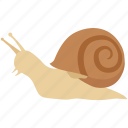 escargot, freshwater, land, mollusc, sea, slow, snail icon