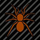 animal, arachnida, bug, insect, poisonous, spider, tarantula