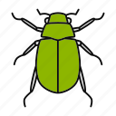 arthropoda, beetle, bug, chafer, insect, junebug, melolontha icon