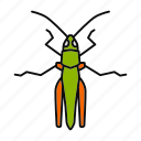 bug, caelifera, grasshopper, insect, locusts, pest icon