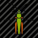 bug, caelifera, grasshopper, insect, locusts, pest