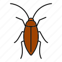 animal, blattodea, bug, cockroach, insect, parasite, pest