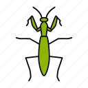 bug, entomology, insect, mantis, mantodea, pest, praying
