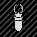 beetle, bug, deer, insect, lucanus, servus, stag