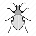 animal, beetle, bug, carabidae, ground, insect, nature icon