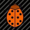 beetle, bug, coccinellidae, insect, ladybird, ladybug, spotted