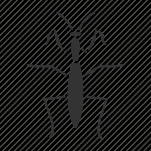 beetle, bug, insect, mantis, mantodea, pest, praying icon