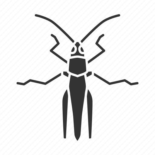 beetle, bug, caelifera, grasshopper, insect, locusts, pest icon