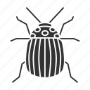 animal, beetle, bug, colorado, insect, pest, potato