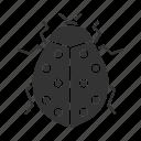 beetle, bug, coccinellidae, insect, ladybird, ladybug, spotted icon