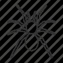 animal, arachnida, bug, insect, poisonous, spider, tarantula icon