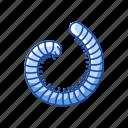 animal, insect, millipede, parasite, pest, snake millipede