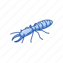animal, body lice, head lice, insects, lice, termites icon