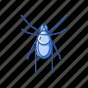 animal, arachnids, hard tick, insets, parasite, scale tick, tick