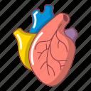 cartoon, healthcare, heart, human, medicine, organ, science