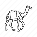 animal, camel, camel walking, hoof icon