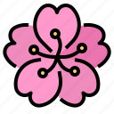 asia, flower, gift, japan, sakura