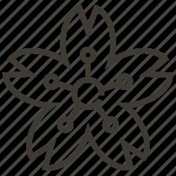 flower, japan, lotus, nature icon