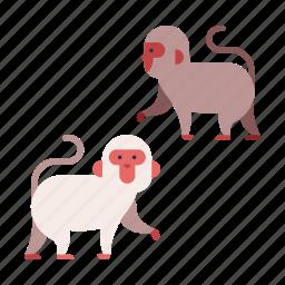 animal, ape, japanese, japanese monkey, monkey, nature, wildlife icon