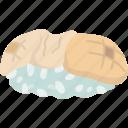 hotate, nigiri, sushi, rice, dish