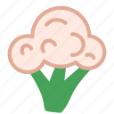 broccoli, food, healthy, vegetable icon