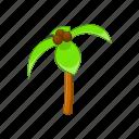 exotic, botany, coconut, tree, green, palm, cartoon