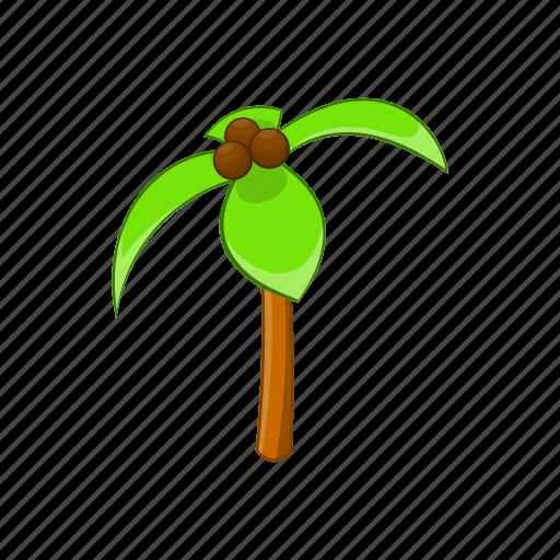 botany, cartoon, coconut, exotic, green, palm, tree icon