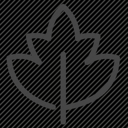 botanic, foliage, leaf, plant icon