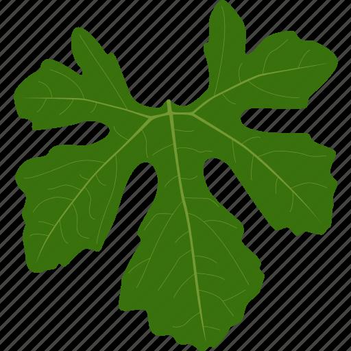 agriculture, botanical, botany, herb, leaf, leaves, plant icon