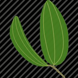 botanical, botany, bush, forest, leaf, leaves, plant icon