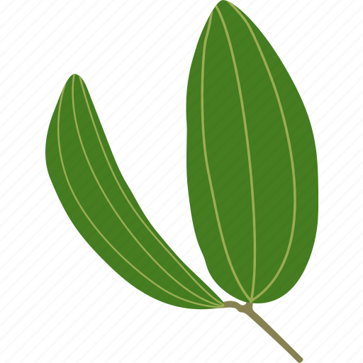 botanical, botany, bush, forest, leaf, leaves, plant icon