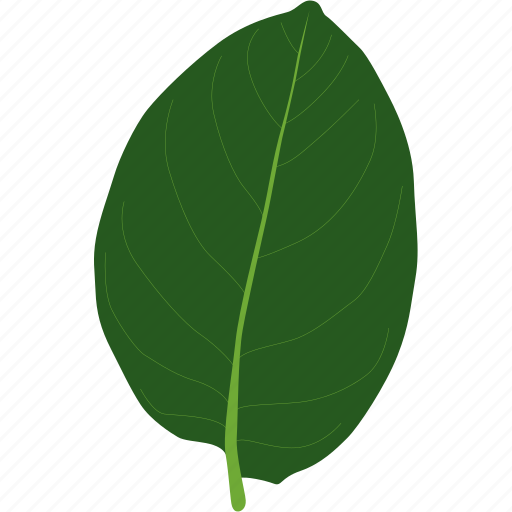 herb, herbal, leaf, leaves, organic, plant, tree icon