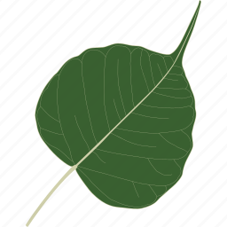 bo, herb, leaf, leaves, organic, plant, tree icon