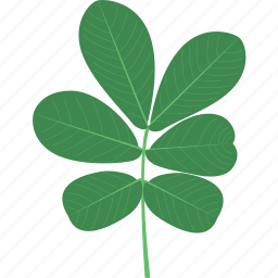 ecology, forest, jungle, leaf, leaves, organic, plant icon
