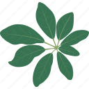 bush, leaf, leaves, plant, rain forest, tree, tropical icon