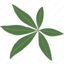 ecology, foliage, herb, jungle, leaf, leaves, plant icon