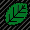 alder, leaf, nature, plant, tree