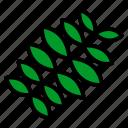 fabaceae, leaf, nature, plant, tree